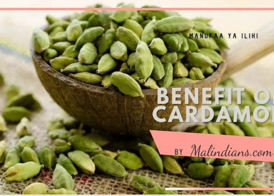 Benefits of Cardamon (Iliki) - Spices & foods of Malindi