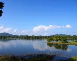 Sri Lanka malindkate Jungle