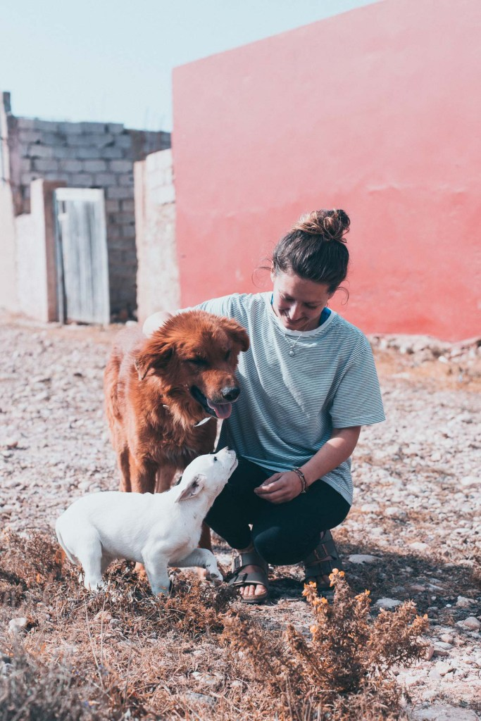 Stray dogs in Imsouane are one of the kindest I met in whole of Morocco.