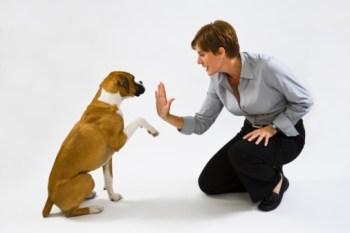 Dog Training Technique.jpg