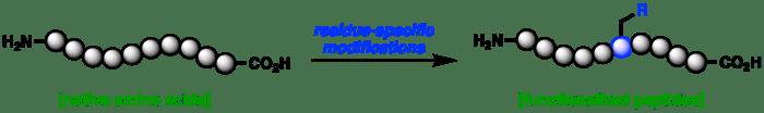 Website research scheme1
