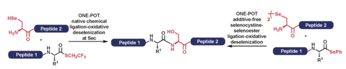One-Pot Ligation-oxid deselenization TOC