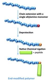 TOC RAFT polymer NCL