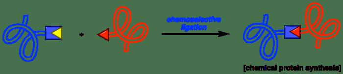 Protein ligation website Scheme