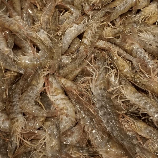 Live Shrimp 游水虾 1-1.2 LB