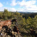 En defensa del pastoreo, los bosques y la libertad