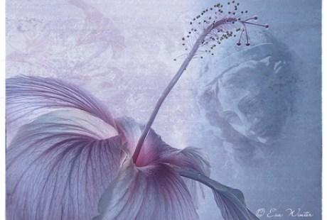 Composing 03 hibiscus-rosa
