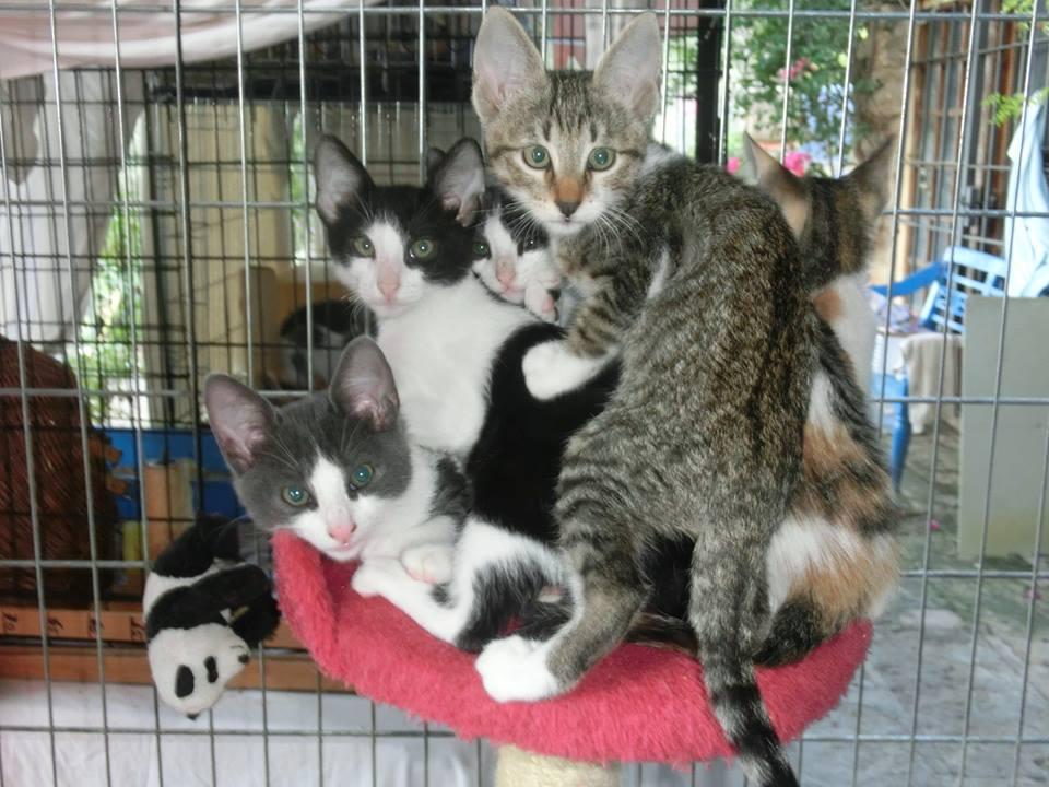 Felix-Animal-Andratx - Katzenkinder