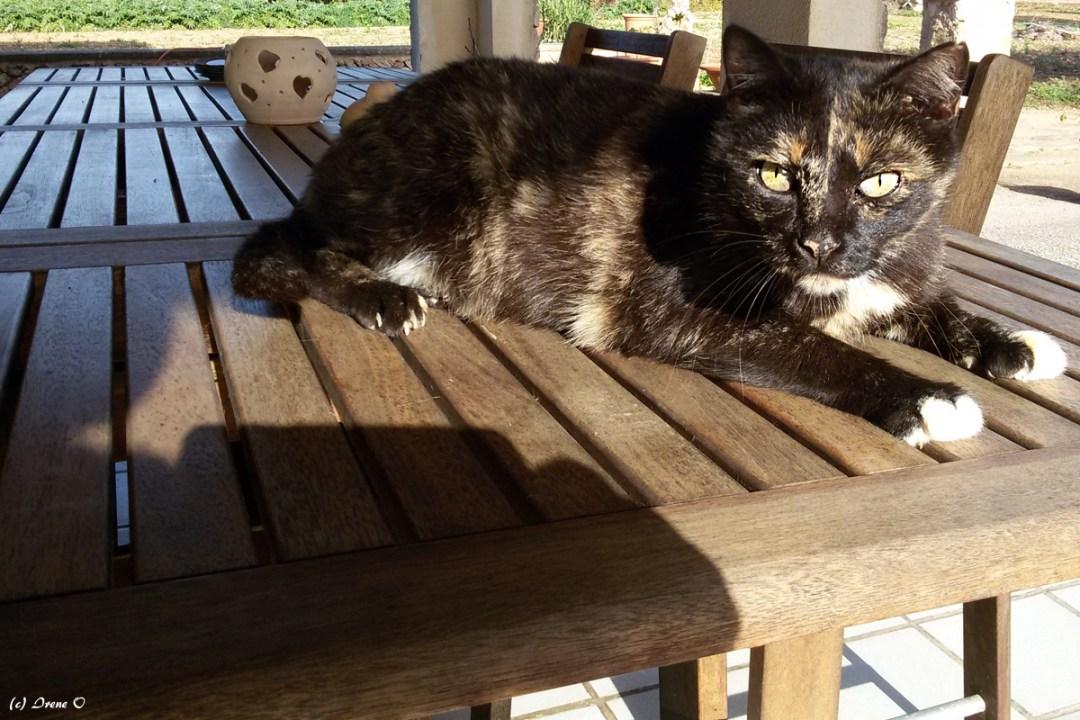 Katze Weisspfote