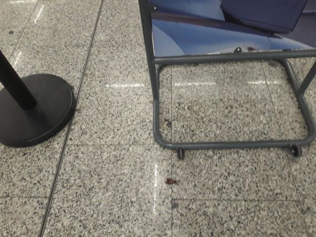 Pulgas y cucarachas en el aeropuerto de Palma