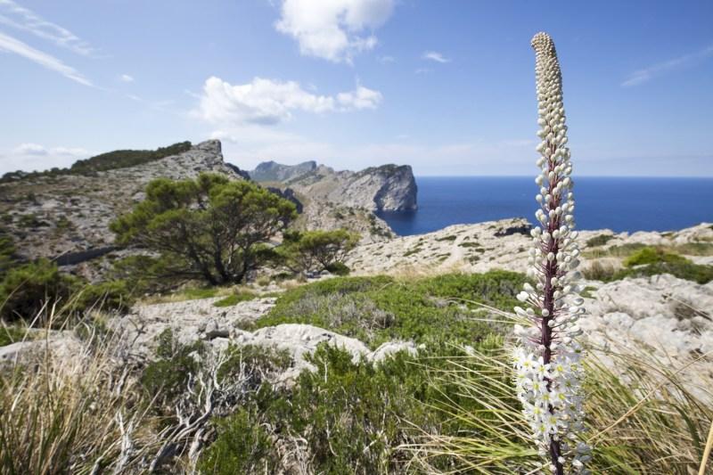 Peninsula de Formentor.