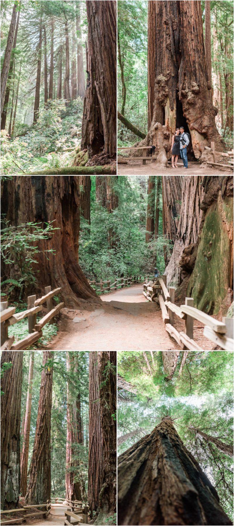 Muir Woods National Reserve Redwoods Forrest