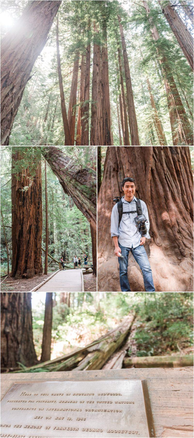 Muir Woods Redwoods National Park California