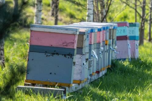 Les ruches à Atalante Saint-Malo