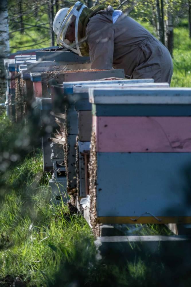 Les ruches à Atalante