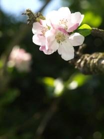 high blossom
