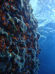 Reef at Forna Point dive site