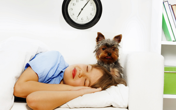 Yorkshire Terrier wants her mom to wake up