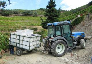 Small as it is, the little tractor is challenged to manoeuvre in the vineyards