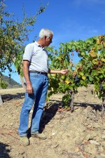 Alexandre samples Touriga Franca berries at Quinta do Tua, Friday, August 29th.