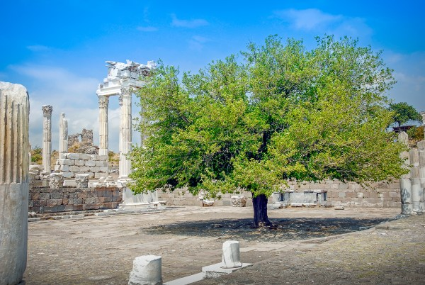 Lonesome tree in Greek ruins located at Bregama in Turkey