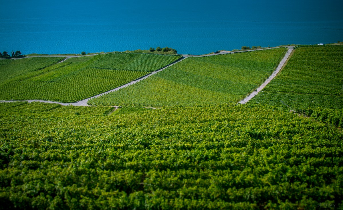 The greens of the vineyards against the blue of the lake