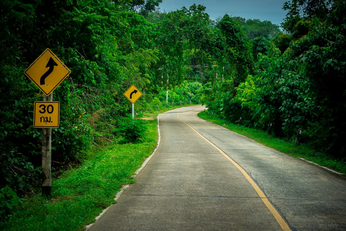 The road into the jungle with yellow street signs