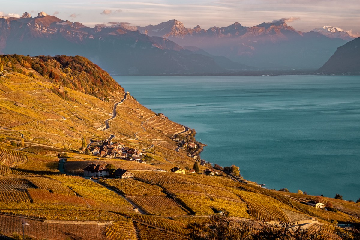 Landscape view of the Lavaux Unesco World Heritage with the lake and alps in the background