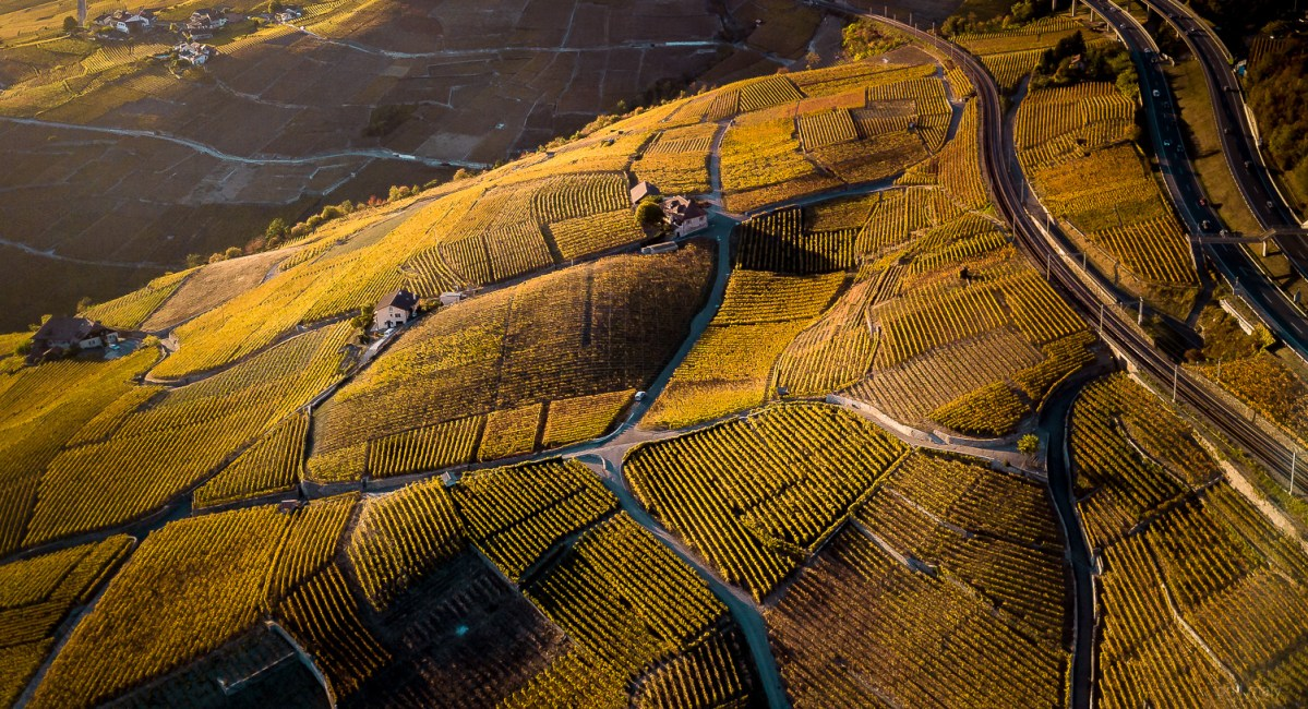 Drone shot of the shadows over the vineyards at sunset