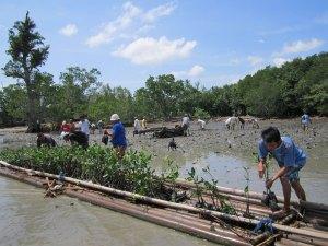 Große Mangroven Aktion 2017