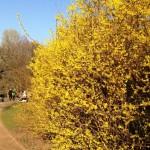 12 von 12 im März :::: Frühling!