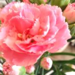 Erlebnisbericht Wohlfühl-Challenge, 1. Tag: Blumen kaufen
