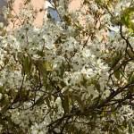 Freitagslieblinge: Unsere Umzugswoche mit Chaos und Frühling