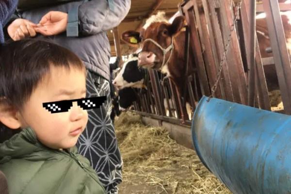 牛を見てびっくりする息子