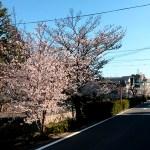 西宮のお花見「武庫川沿いではなく・・・」
