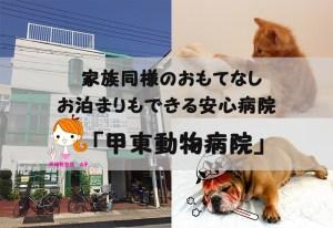 甲東動物病院