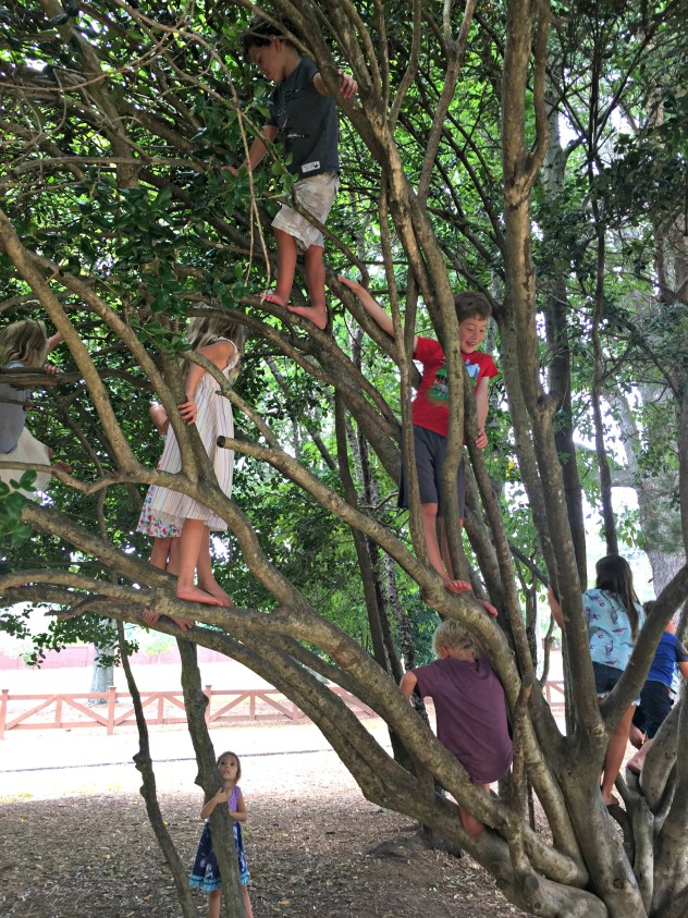 Climbing Trees - Day