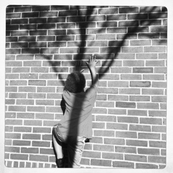 scaling the wall to climb the tree