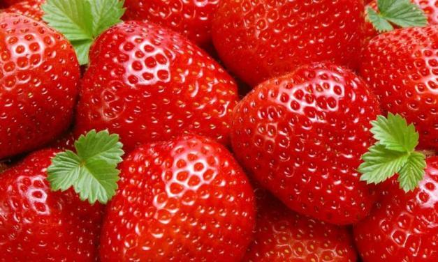 Morango e seus benefícios à saúde