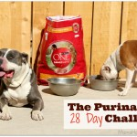 What the Purina One 28 Day Challenge Means for our Family
