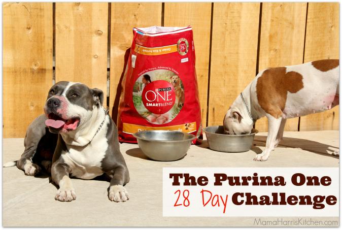 Purina One 28 Day Challenge