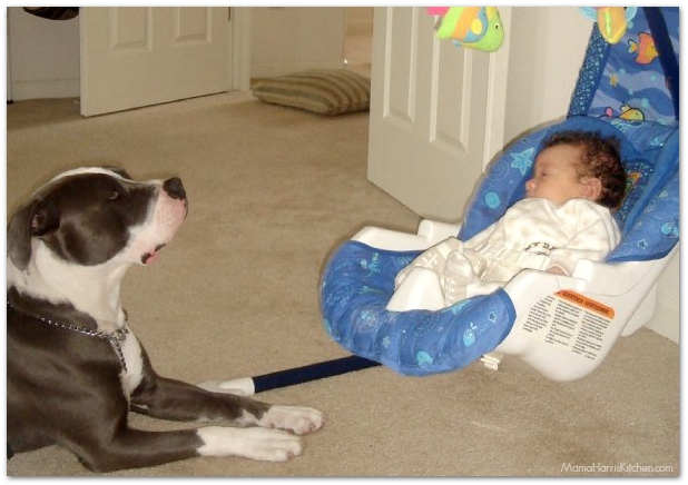 nanny dog with baby on swing | Mama Harris' Kitchen