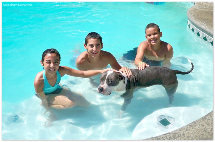 pitbull in a pool | Mama Harris' Kitchen