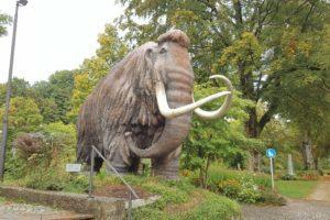rudi-das-siegsdorfer-mammut