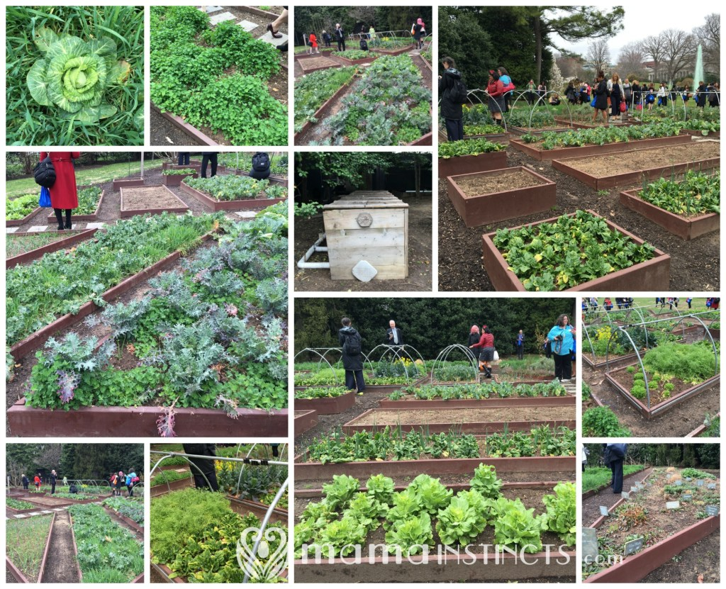 #whitehouse #flotus #letsmove #kidshealth #healthykids #beatobesity #whitehousekitchengarden