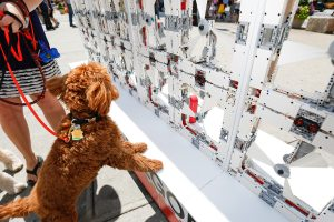 Four-legged New Yorker seeks relief from the dog days of summer in front of a fully-functioning Wall of Fans made from LEGO® Technic elements, standing 8 feet tall and 12 feet long during its temporary installation in the Flatiron District on Wednesday, August 5, 2015 in New York. (Mark Von Holden/AP Images for Lego Group)