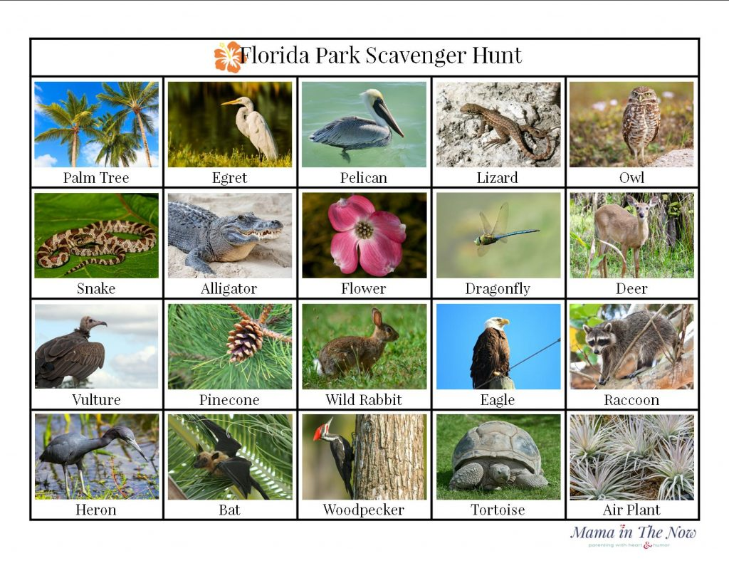 Florida scavenger hunt, Florida wildlife bingo. Great activity for kids to learn and enjoy Florida National Parks.