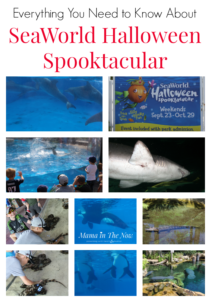 The SeaWorld Halloween Spooktacular event is the perfect family event when you need to disconnect from electronics to reconnect as a family. Animal encounters, Halloween-themed events, family fun and educational experiences for everyone in the family.