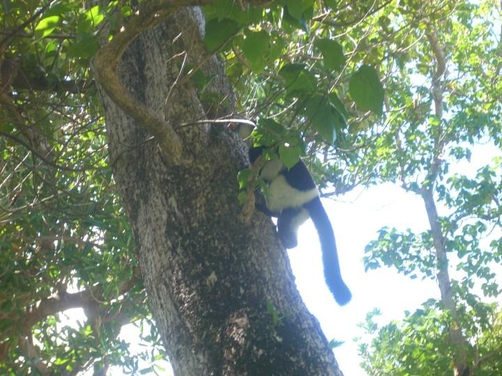 Madagascar 170