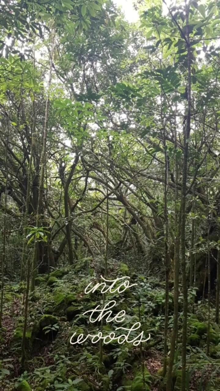 Le sentier botanique de la forêt de Mare Longue – Saint Philippe